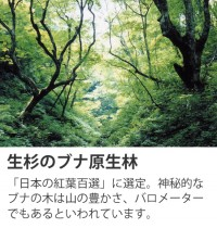 生杉のブナ原生林
